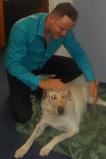 magnétiseur animalier, guérisseur d'animaux
